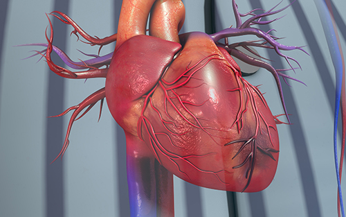 Symptoms and conditions associated with heart disease swollen legs and tight skin