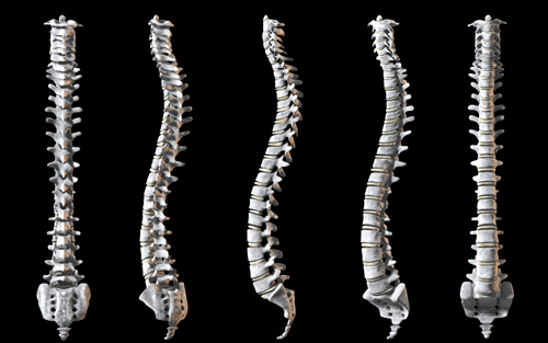 Good posture for a straight spinal column
